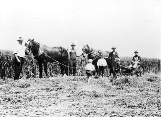 Bensonville c. 1908